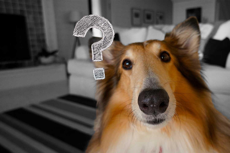 Trotz Quellenschutz - Warum befragt das BAK einen Herausgeber - Foto pixabay