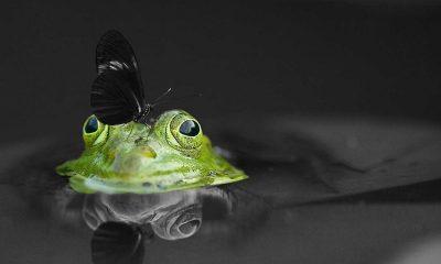 Grüne Bundeskongress - Basis entscheidet über Koalition
